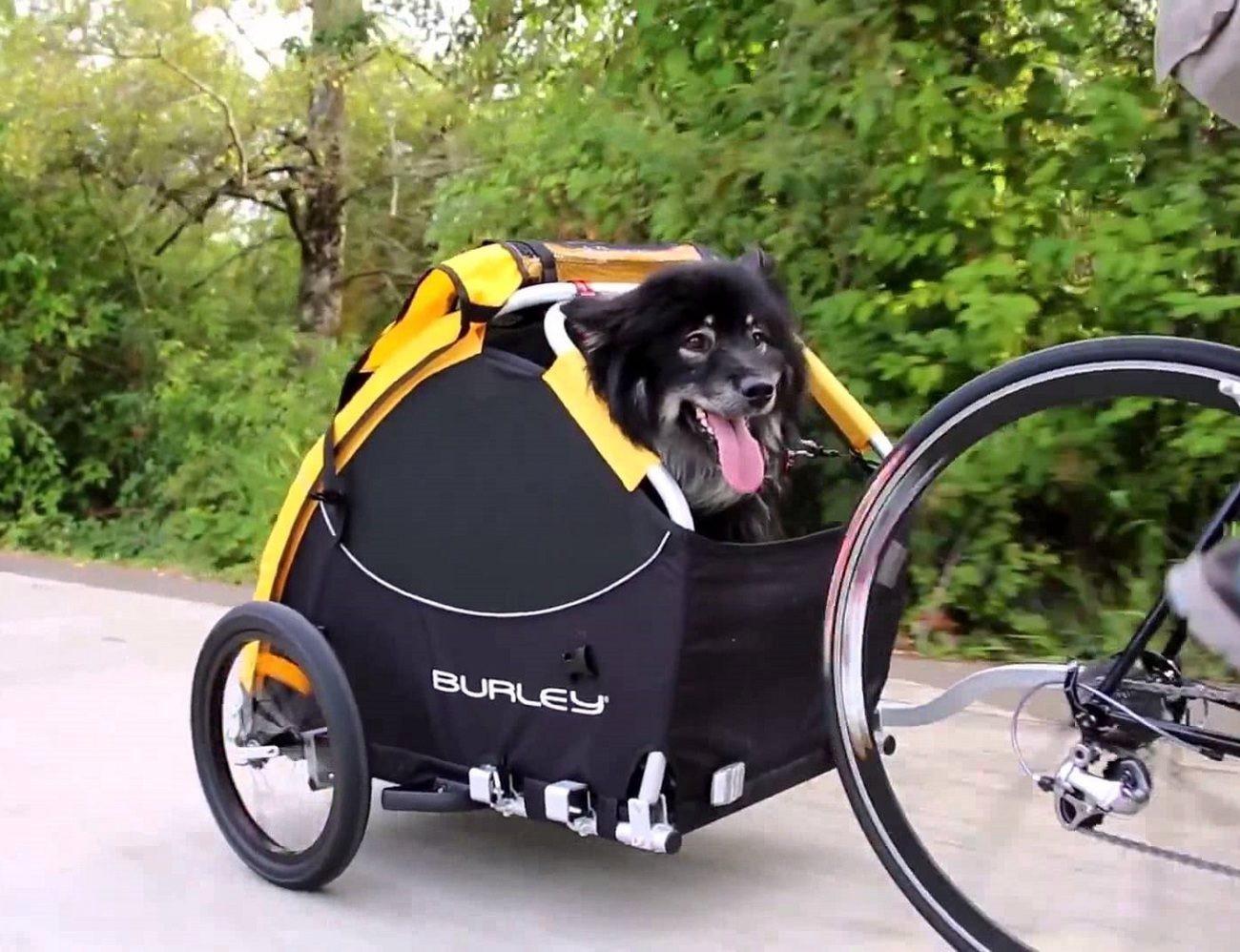 Pet bicycle